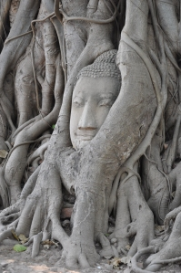 Ayutthaya - testa del buddha tra le radici